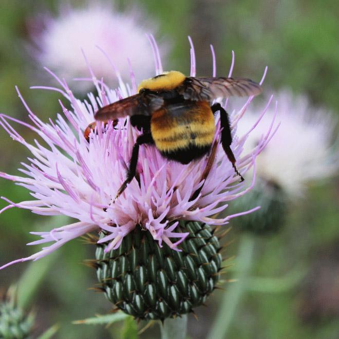 Cute bumblebee butt.