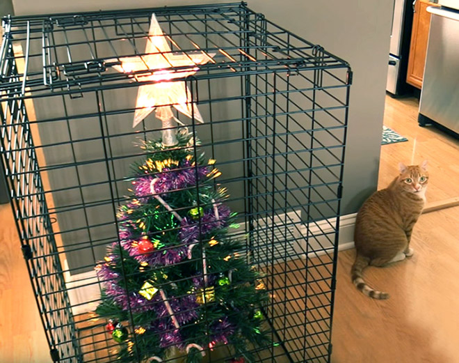 How to protect your Christmas tree from pets.