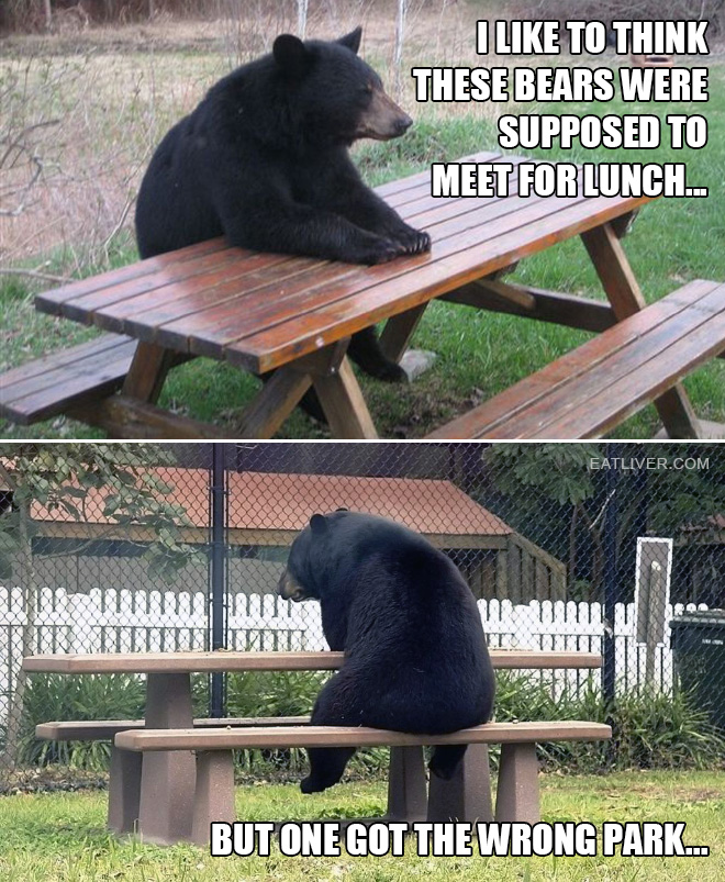 I like to think these bears were supposed to meet for lunch, but one got the wrong park.
