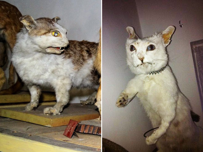 Low budget cat taxidermy.