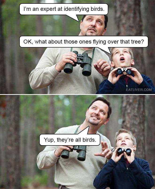 It's actually quite easy to identify birds.