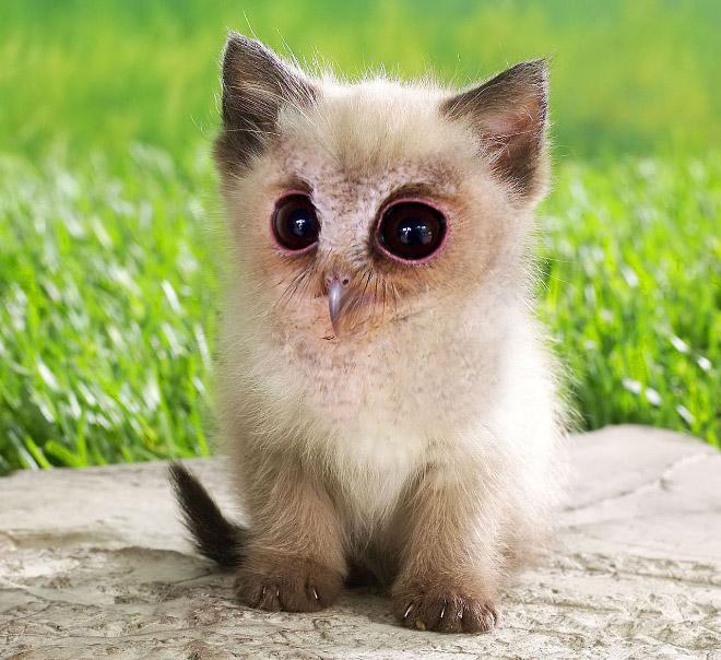 Birdcat... or catbird?
