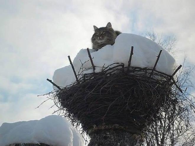Cat bird.