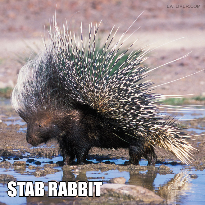 This is a much better animal name.