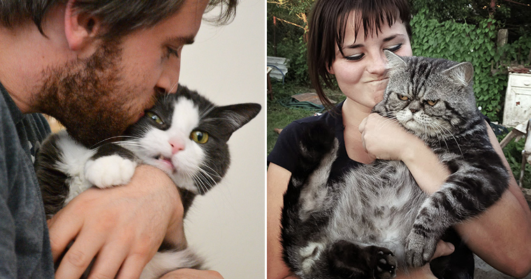 Cats That Hate To Be In Dumb Human Selfies