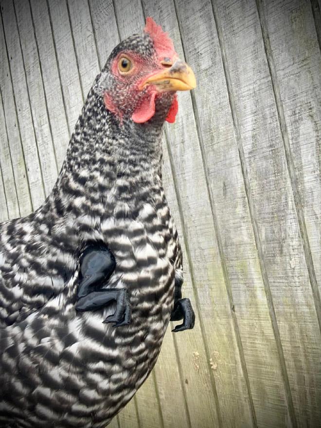 3D printed T-Rex chicken arms.