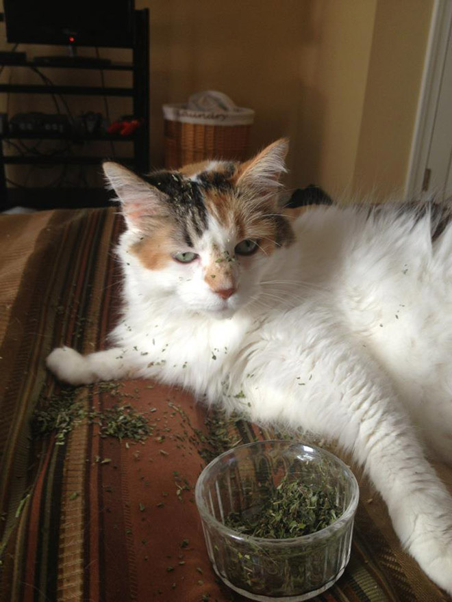 If you won't talk to your cat about catnip, who will?