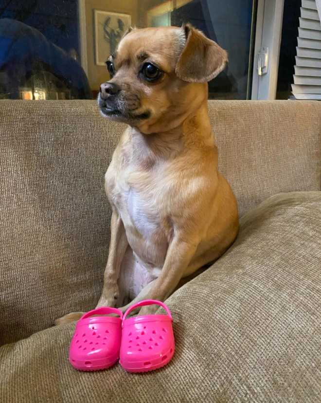 Crocs for dogs.