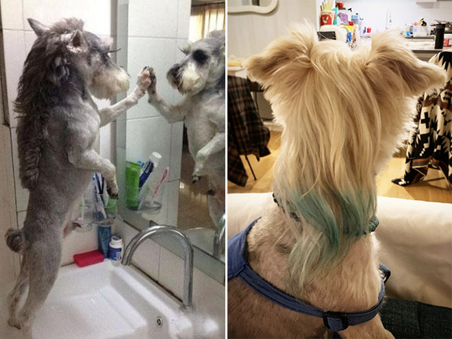 The 1980s are coming back with dog mullets!