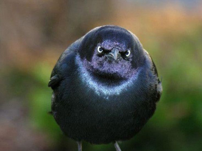 This bird is judging your poor life decisions.