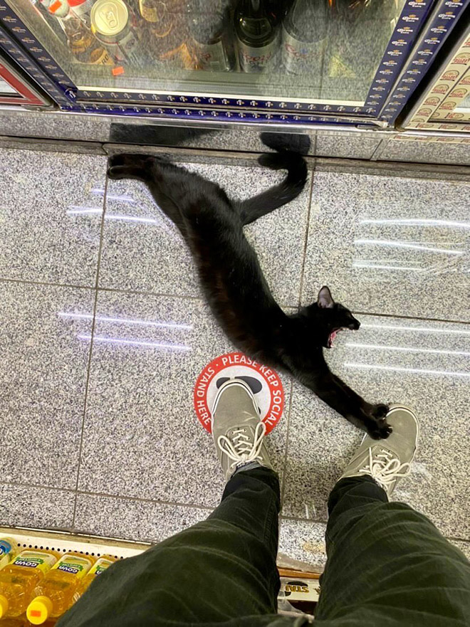 This cat is the real store owner.
