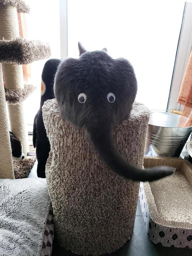 Cat or elephant? You decide!