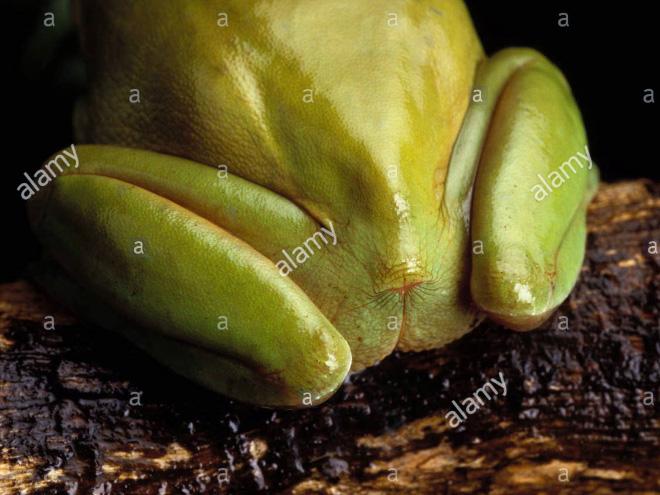 Human-like frog butt.