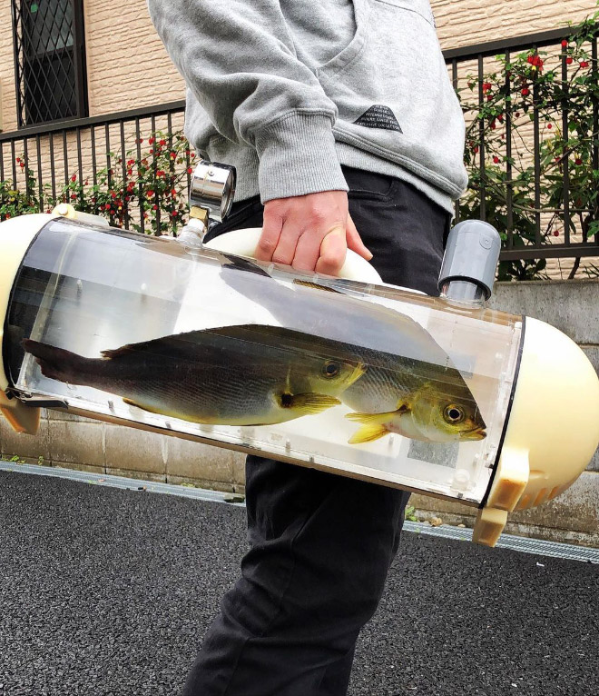 A bag to carry your pet fish around.