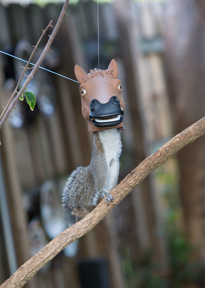 Horse head squirrel feeder is the funniest thing ever!