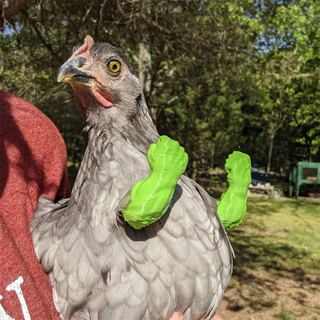 Human-chicken hybrid animal.