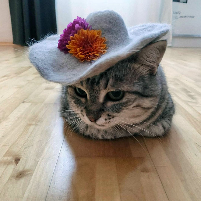 A hat made from cat's own fur? Why not!