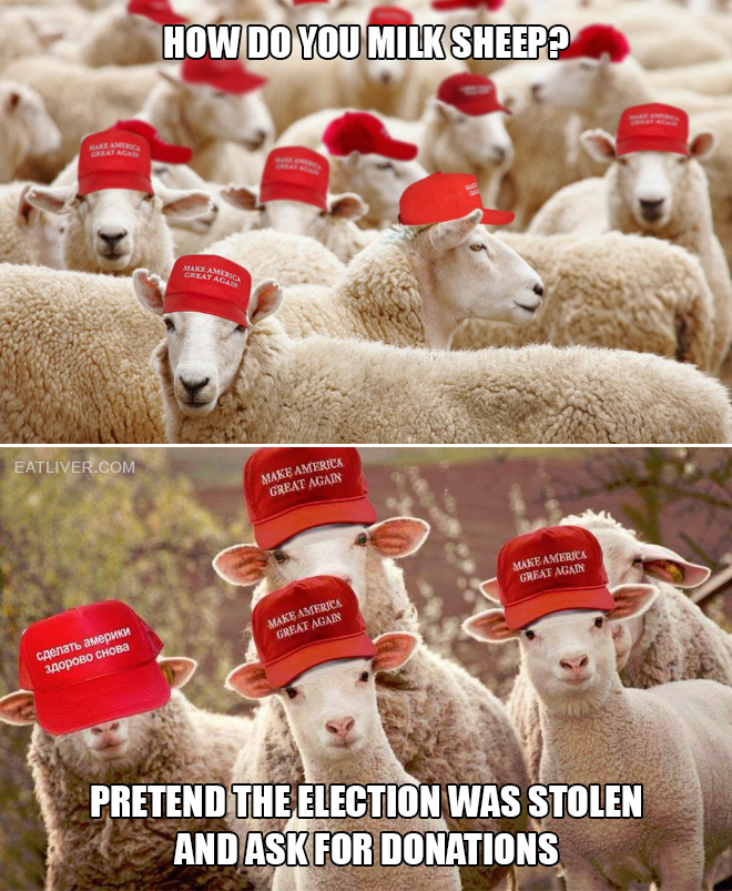 How do you milk sheep? Pretend the election was stolen and ask for donations.
