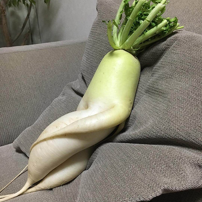 Who would have thought that radishes are so sexy?