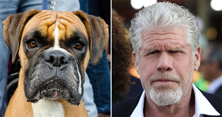 Cats And Dogs That Look Like Ron Perlman