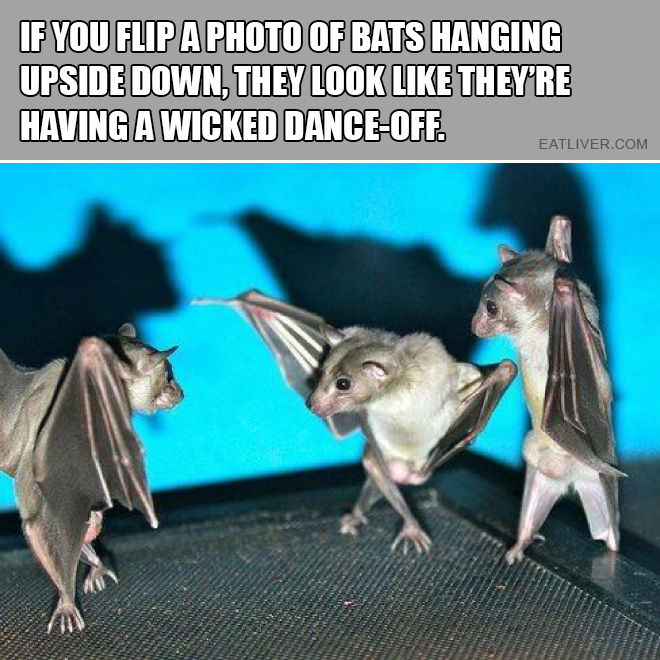 If you flip a photo of bats hanging upside down, they look like they're having a wicked dance-off.
