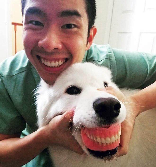 Dog wearing false human teeth.