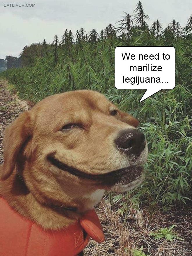 We need to marilize legijuana...