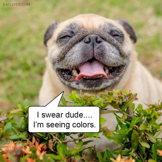 I swear dude.... I'm seeing colors.