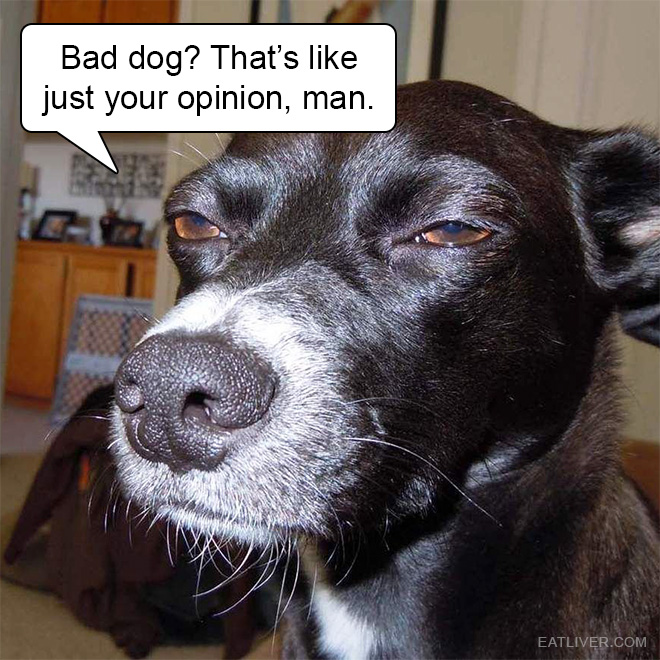 Bad dog? That's like just your opinion, man.